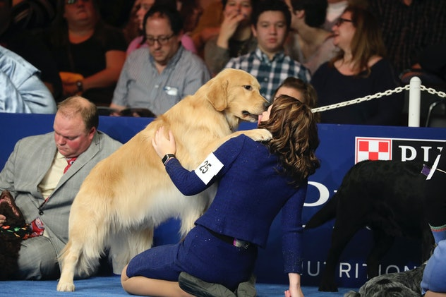 While the National Dog Show is all business, dogs can't help but have a little fun now and again as photos from previous years' National Dog Shows will show.