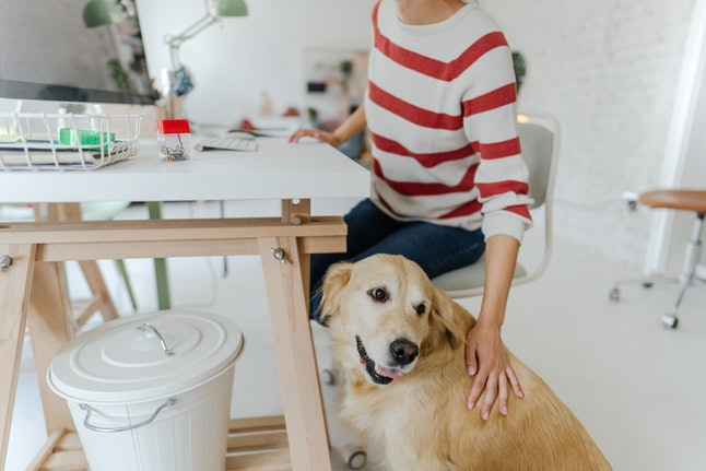 "A person is working at their white desk, while also petting their golden retriever. Bex says being able to bring their service dog to work to alert them to when a pain flare is coming on has been ""life-changing."""