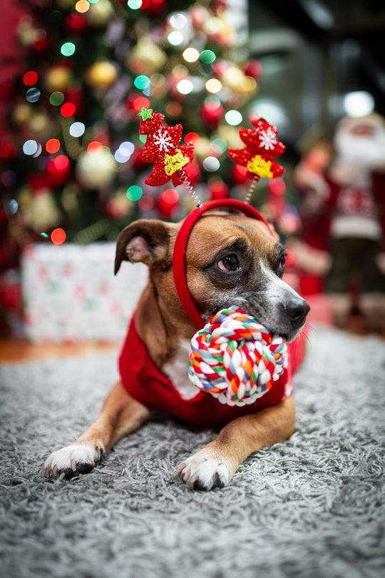 a small dog wearing reindeer antlers