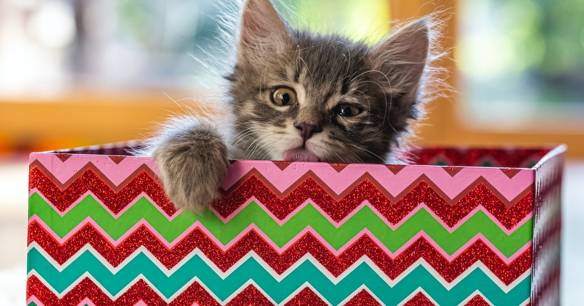 These Photos Of Cats Playing With Wrapping Paper Are The Ultimate Gift