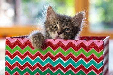 These Photos Of Cats Playing With Wrapping Paper are trending on Twitter and it's the cutest thing y...