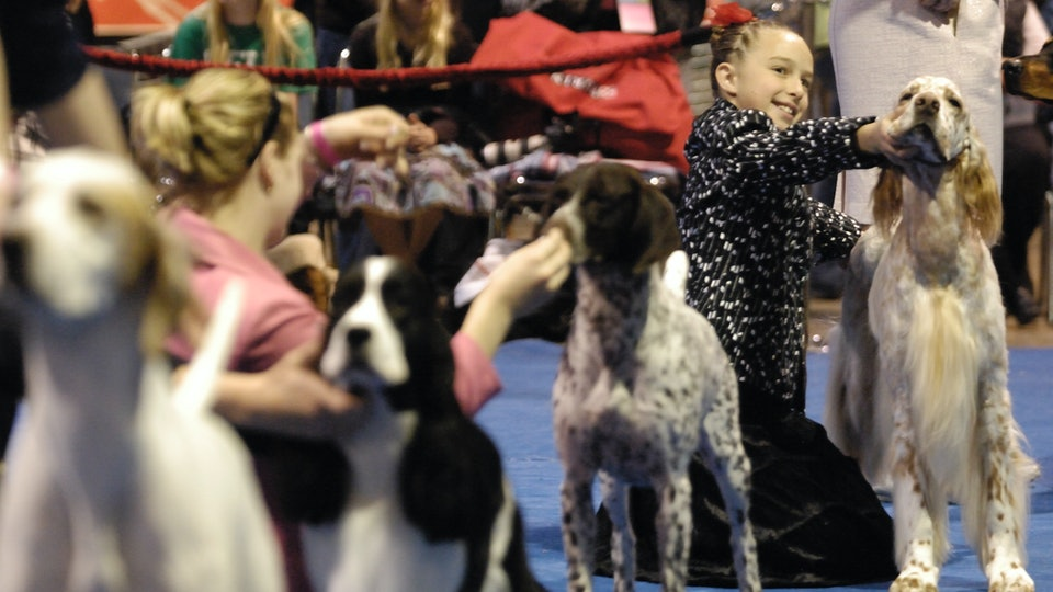 The 'AKC National Championship Dog Show Presented by Royal Canin' airs on Animal Planet on New Year's Day.