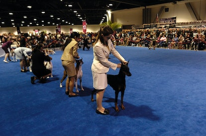 The '2019 AKC National Championship Dog Show Presented by Royal Canin' will air on Animal Planet on New Year's Day and run for three hours long.
