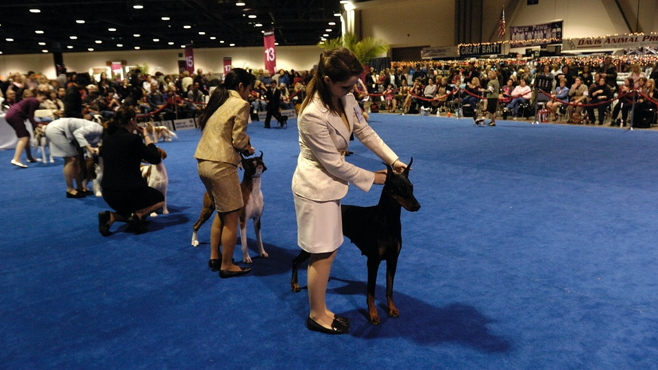 The 2019 AKC National Dog Show will air on Wednesday, Jan. 1 on Animal Planet at 6 p.m.