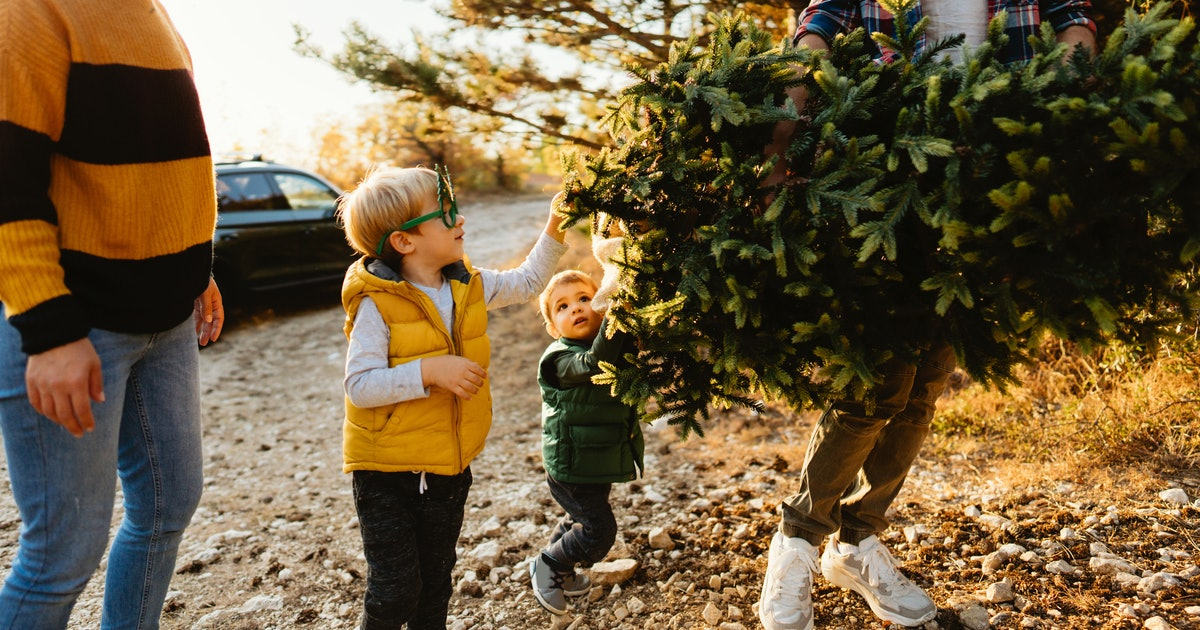How Long Do Live Christmas Trees Last? It Depends On A Few ...
