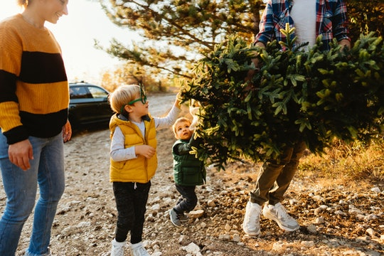 a family bringing their live Christmas tree home