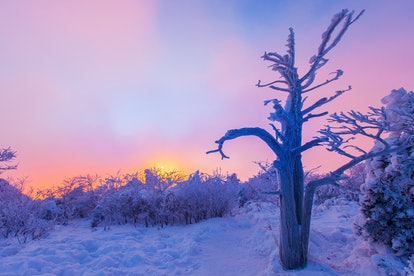 Dawn on a winter landscape. The brain's fear response and cortisol reactions can change in winter months as the days become shorter.