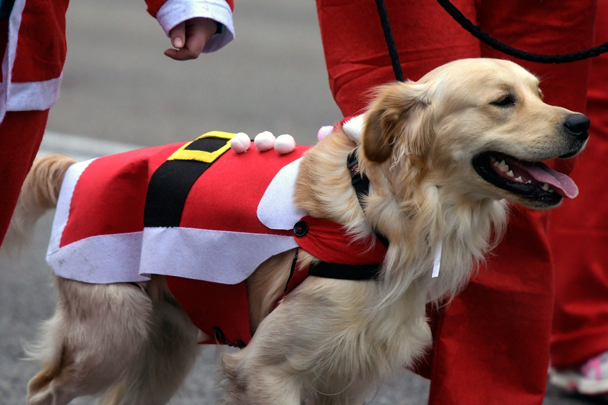 These photos of dogs with Santa