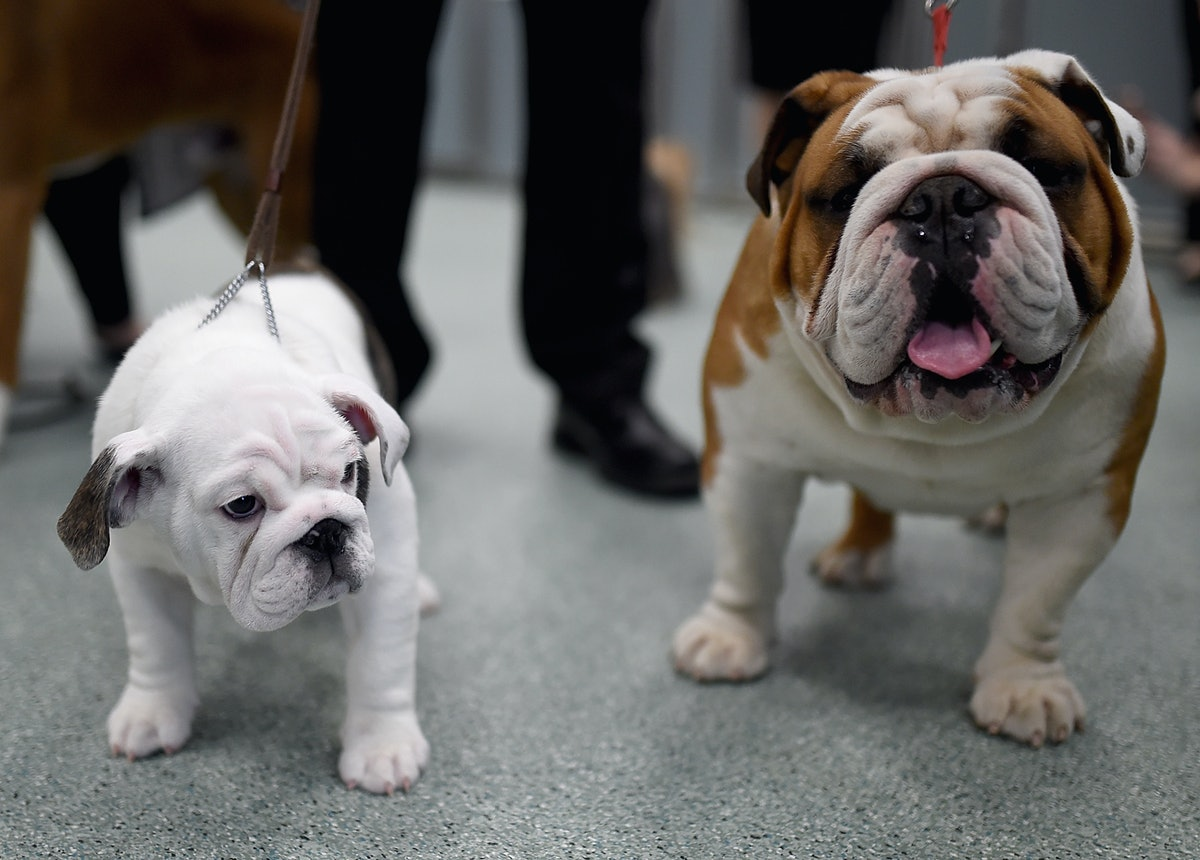 The Top 10 Dog Breeds On Instagram, According To Popular Hashtags