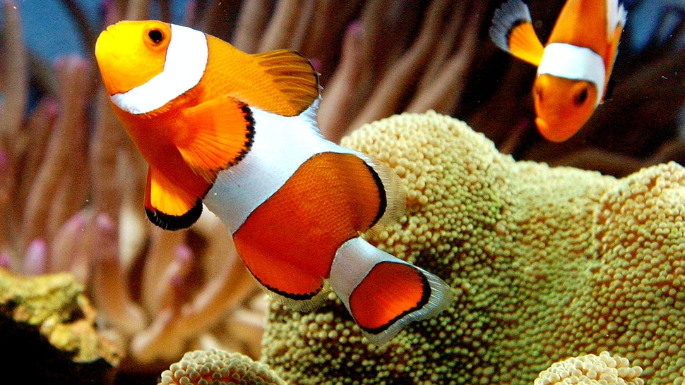 What Does It Mean If You Dream About Fish? Here's What Your