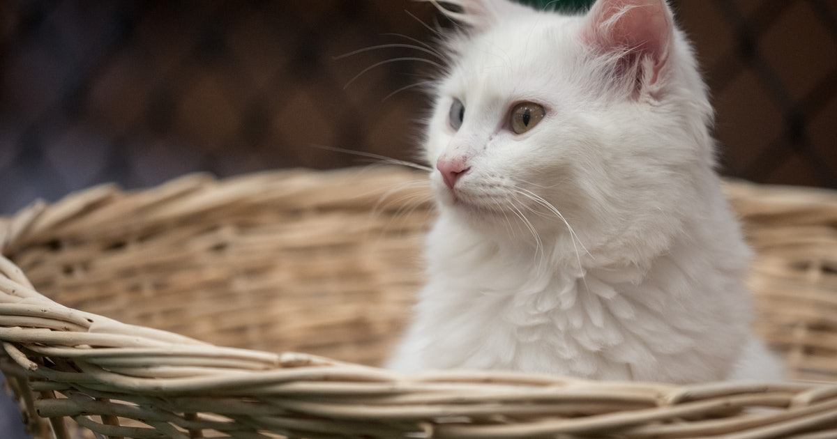What Do Dreams About Cats Mean? Here's What Your Sleeping Brain May Be Telling You