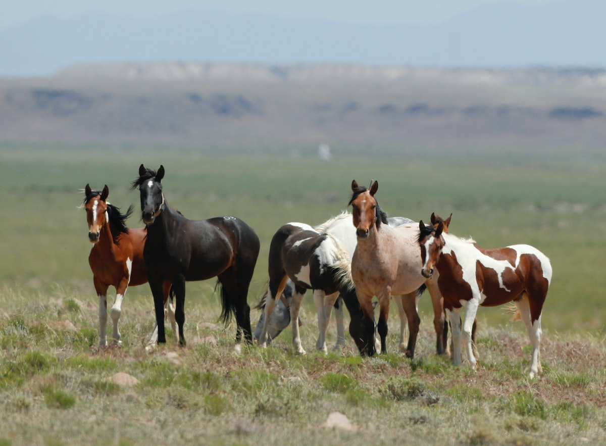 Adopt A Wild Horse & Get Up To $1000 From The Government Thanks To This Program