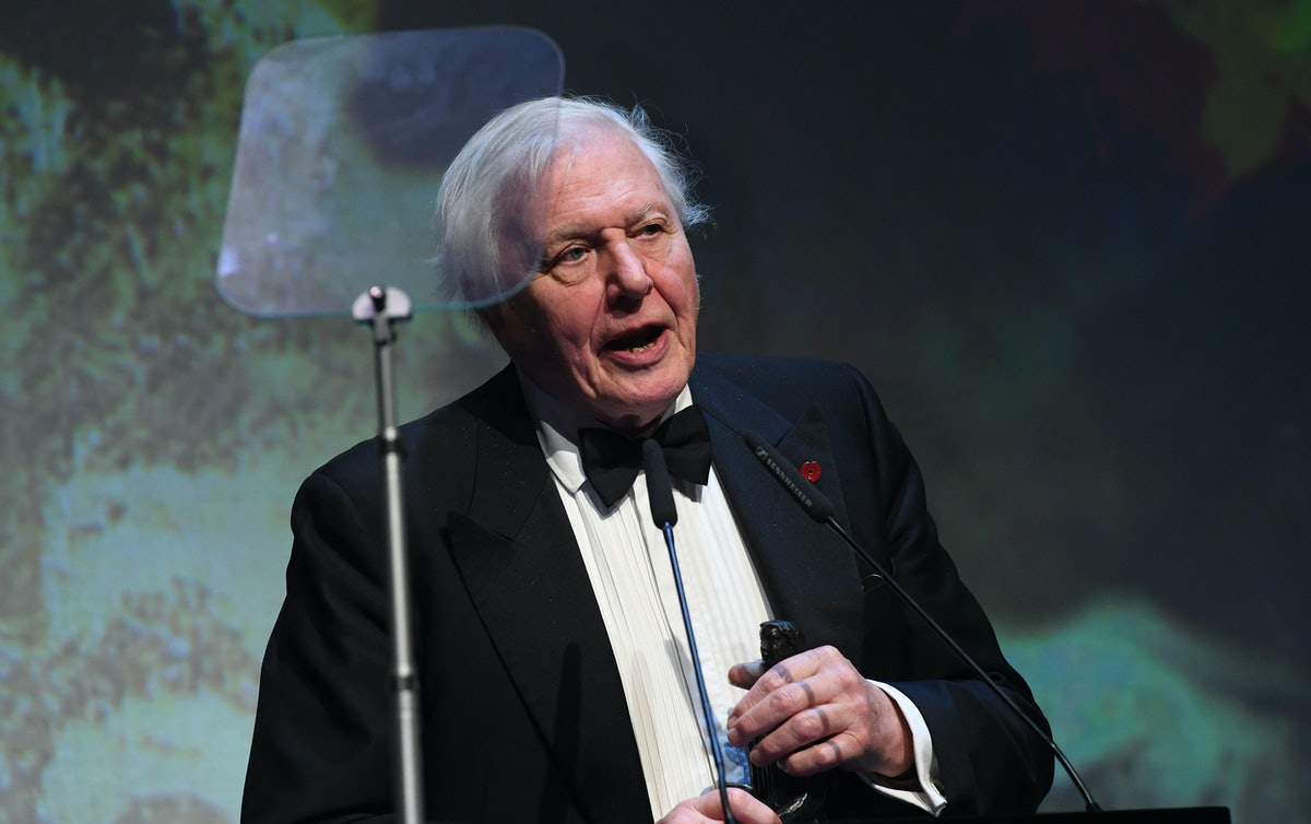 Is David Attenborough On 'Blue Planet Live'? The BBC'S New Spin-Off Series Is Set To Air Very Soon