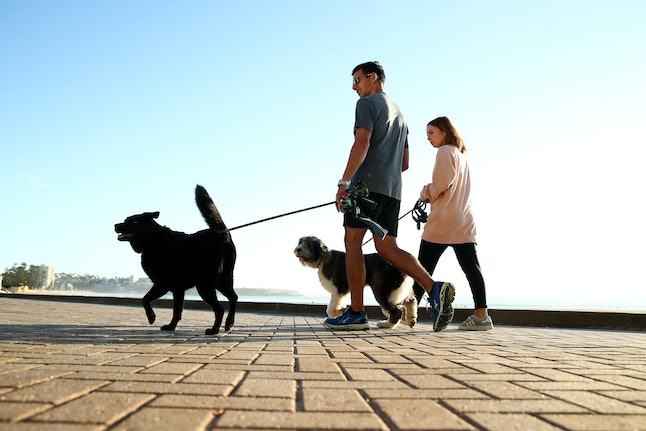 How To Make Having A Pet More Eco Friendly With These 7