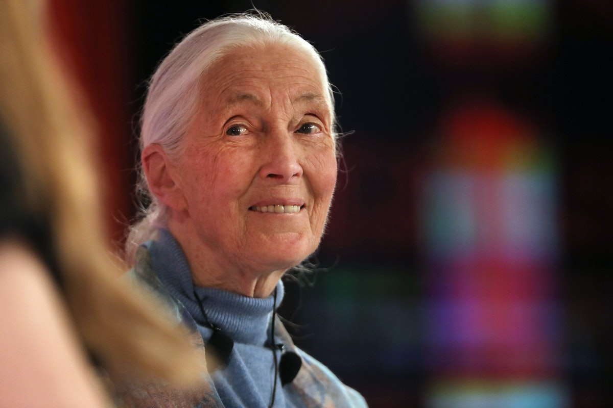 Jane Goodall Condemns A Viral Video Of A Chimpanzee Using Instagram