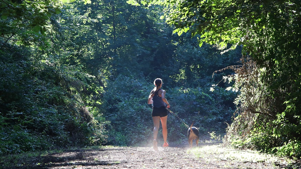 6 Best Dog Breeds For Trail Runners So Your Pup Can Keep Up