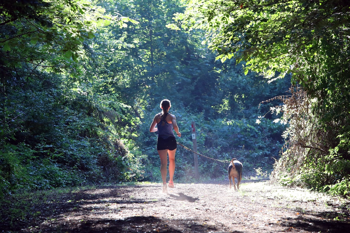 7 Best Dog Breeds For Running With In All Climates