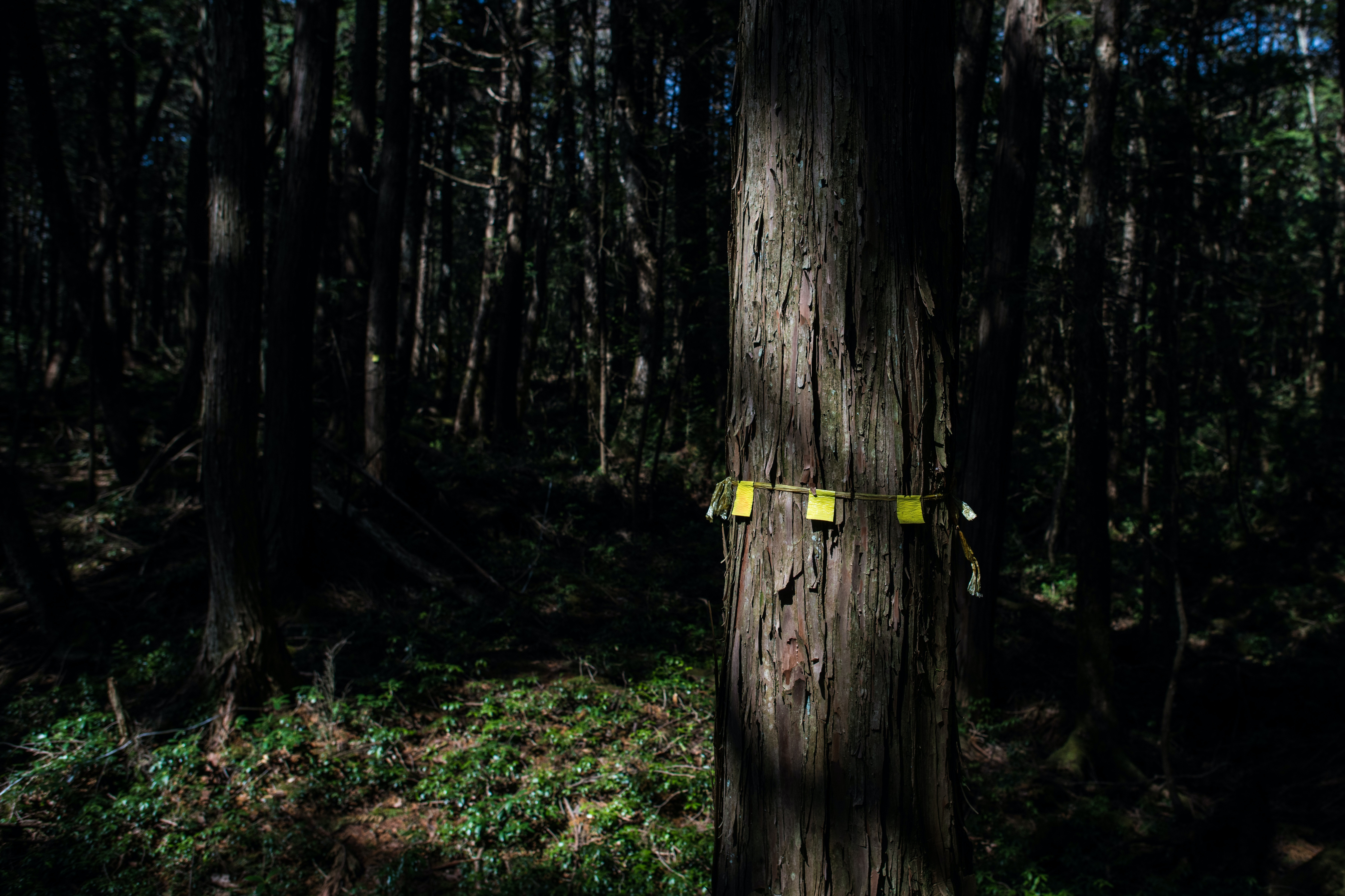 These Real Stories From The Japanese Suicide Forest Will