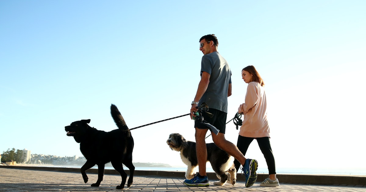 Dogs Can Help Heart Health, A New Study Says