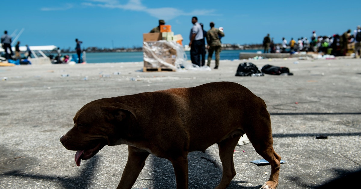 How To Help Bahamas Animal Shelters After Hurricane Dorian