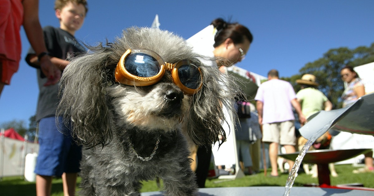 "These Photos Of Dogs Wearing Goggles Feature The Cutest ""Doggle"" Poses Ever"