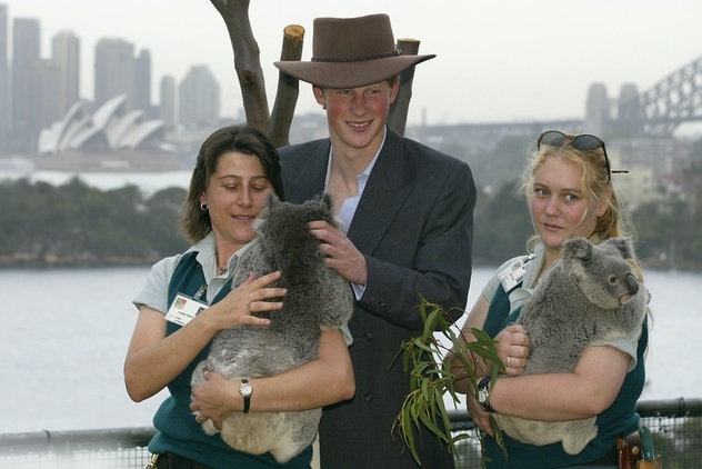 Prince Harry cuddled up to koalas in 2003.