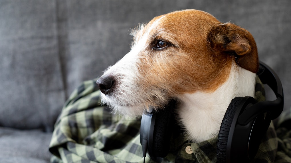 Spotify's New Pet Playlists are perfect for your pup, so get ready to start creating.