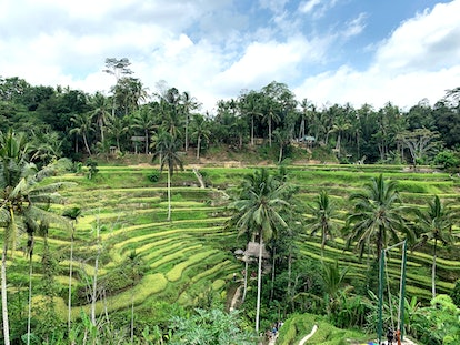See temples and monkeys galore on a 2020 Bali holiday
