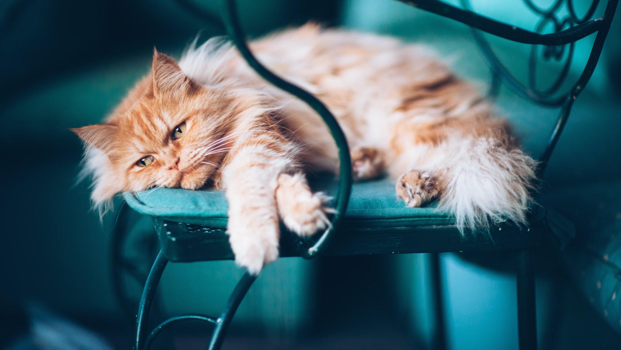 Is Your Cat Depressed?