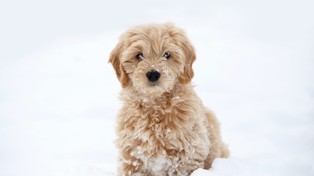 These photos of puppies playing in the snow will brighten your day.