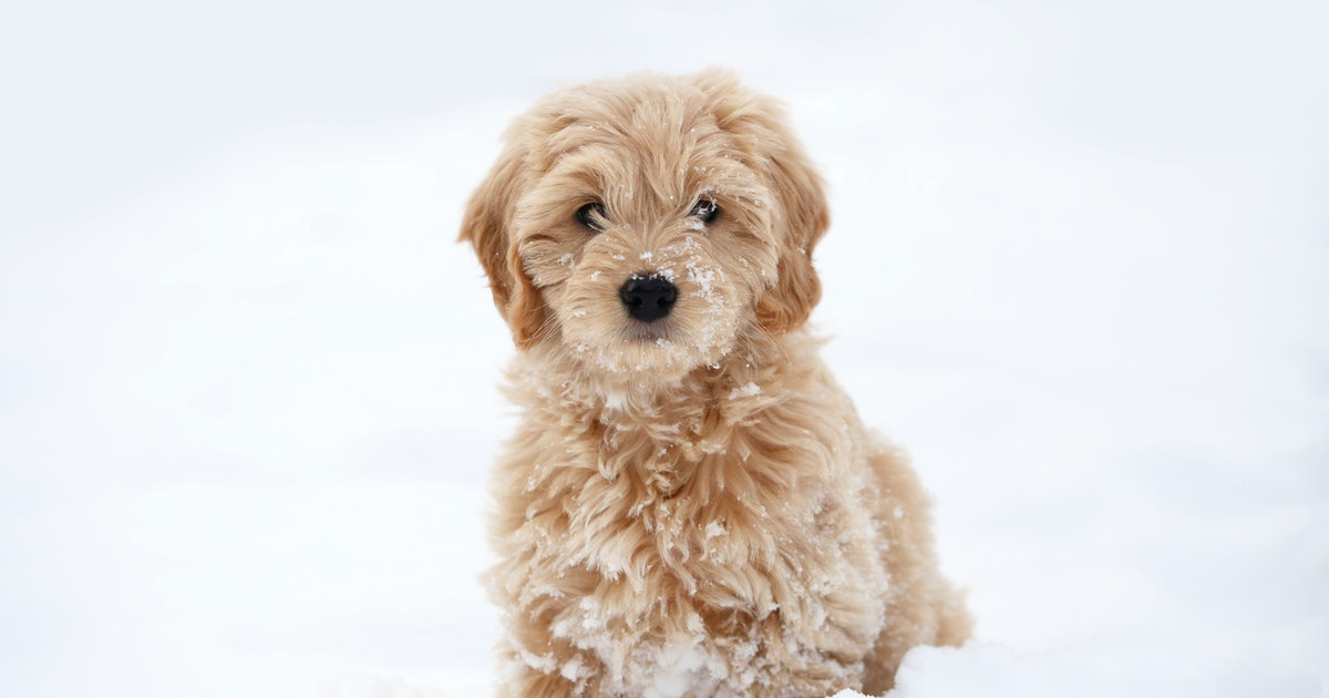 These Photos Of Puppies Playing In The Snow Will Ease Your Winter Blues