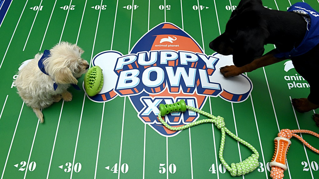 Here's how to watch the 2020 Puppy Bowl for an adorable sporting event.