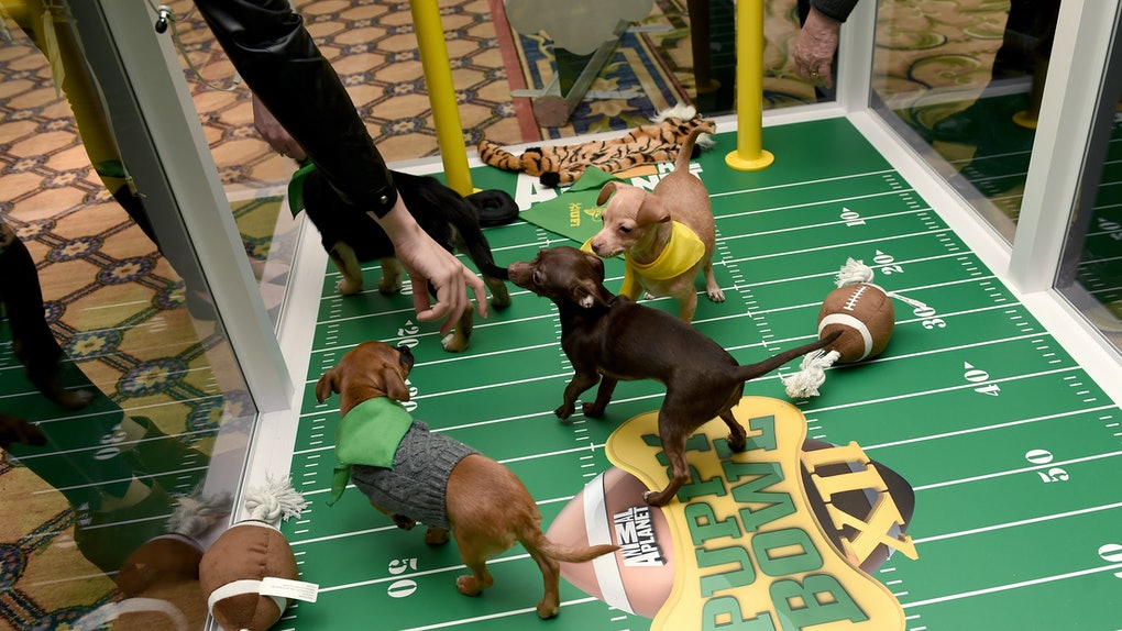 The 2020 Puppy Bowl is coming Sunday, Feb. 2.