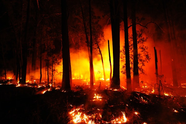How To Help Those Affected By The Fires In Australia to make a difference.