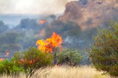 Northern Territory has the least devastation.