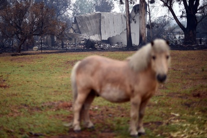 Western Australia is seeing less fires, but still struggling with effects and warnings.