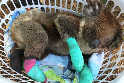 Chris Dickman has estimated that more than 1 billion animals may have died in relation to the Australian wildfires.