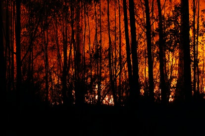 About 25.5 million acres of land is said to have been burned in the fires.