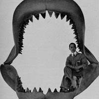 Ancient Megalodon teeth reveal the terrifying shark was in a league of its own