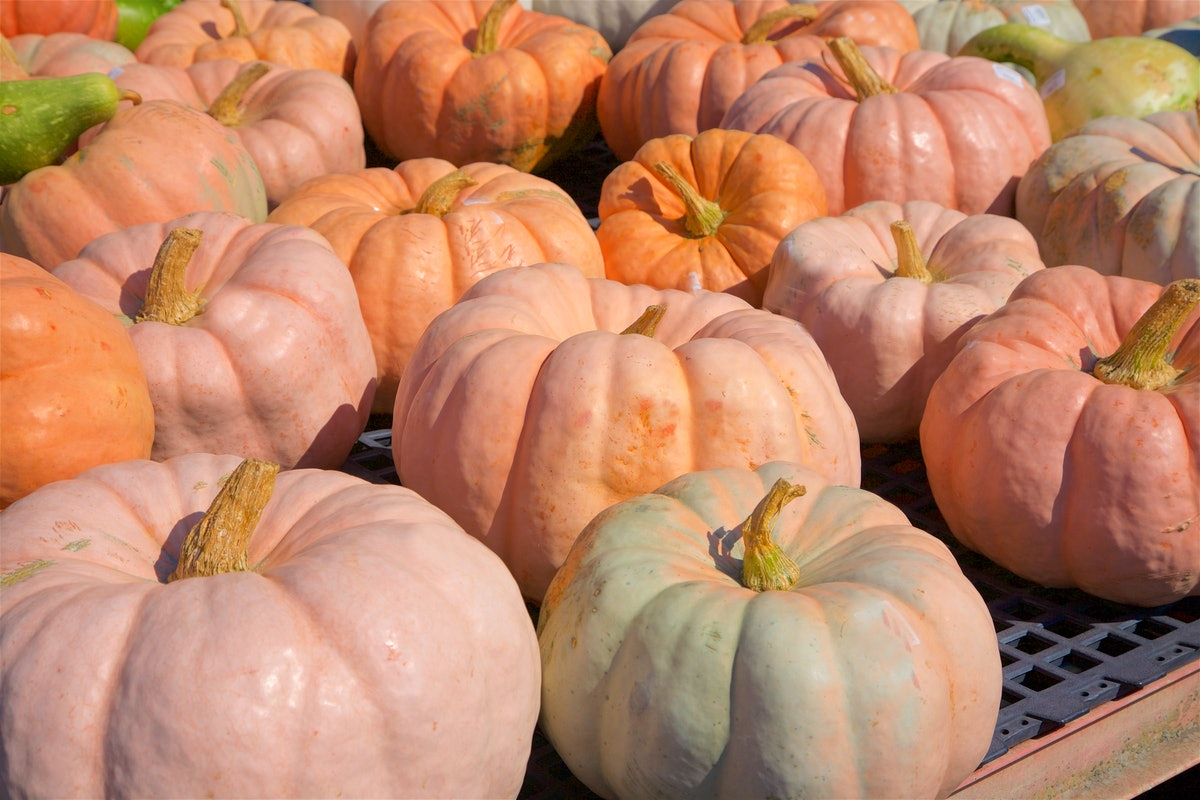 A group of pink pumpkins is on the back of a truck.