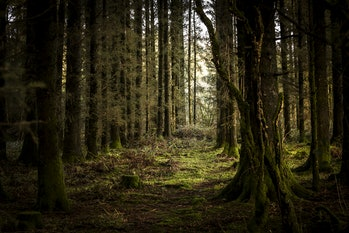 Forests are ultimately uncontrollable. But scientists hope that their vegetation can be managed.