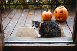 cat and jack o'lanterns on porch