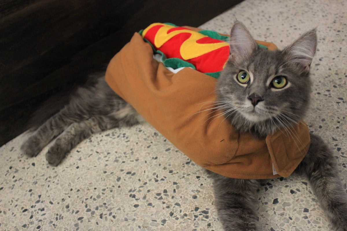 A cat dressed up like a hot dog for halloween sits on the floor.
