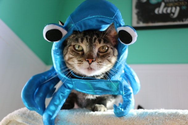 A cat dressed up like an octopus for Halloween sits on a cat tree.