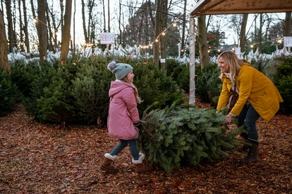 The best time to pick out a Christmas tree is right around Thanksgiving, experts say.