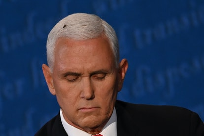 Lizzo's fly on Pence's head Halloween costume is a hilarious take on the awkward moment.