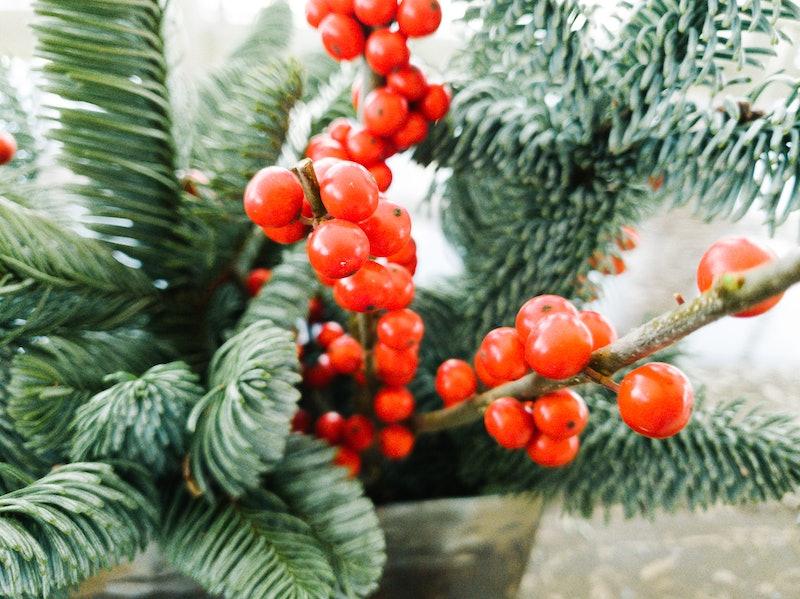 christmas, plants, decor