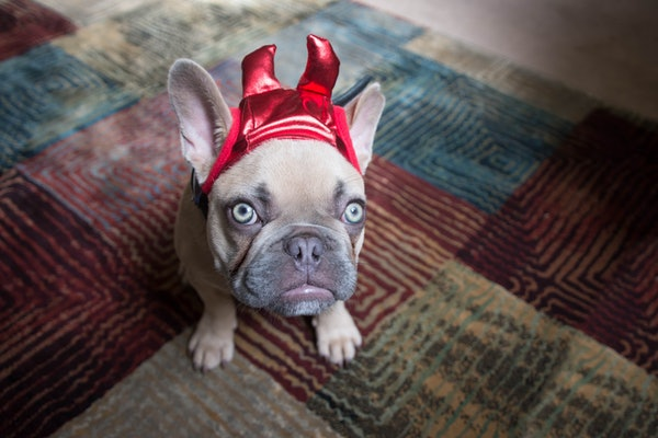 A puppy sits on a rug in a devil costume.