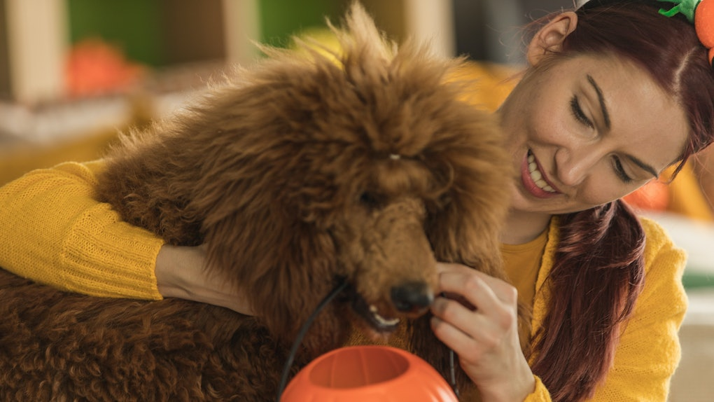A woman hands her dog a jack-o-lantern basket for Halloween.