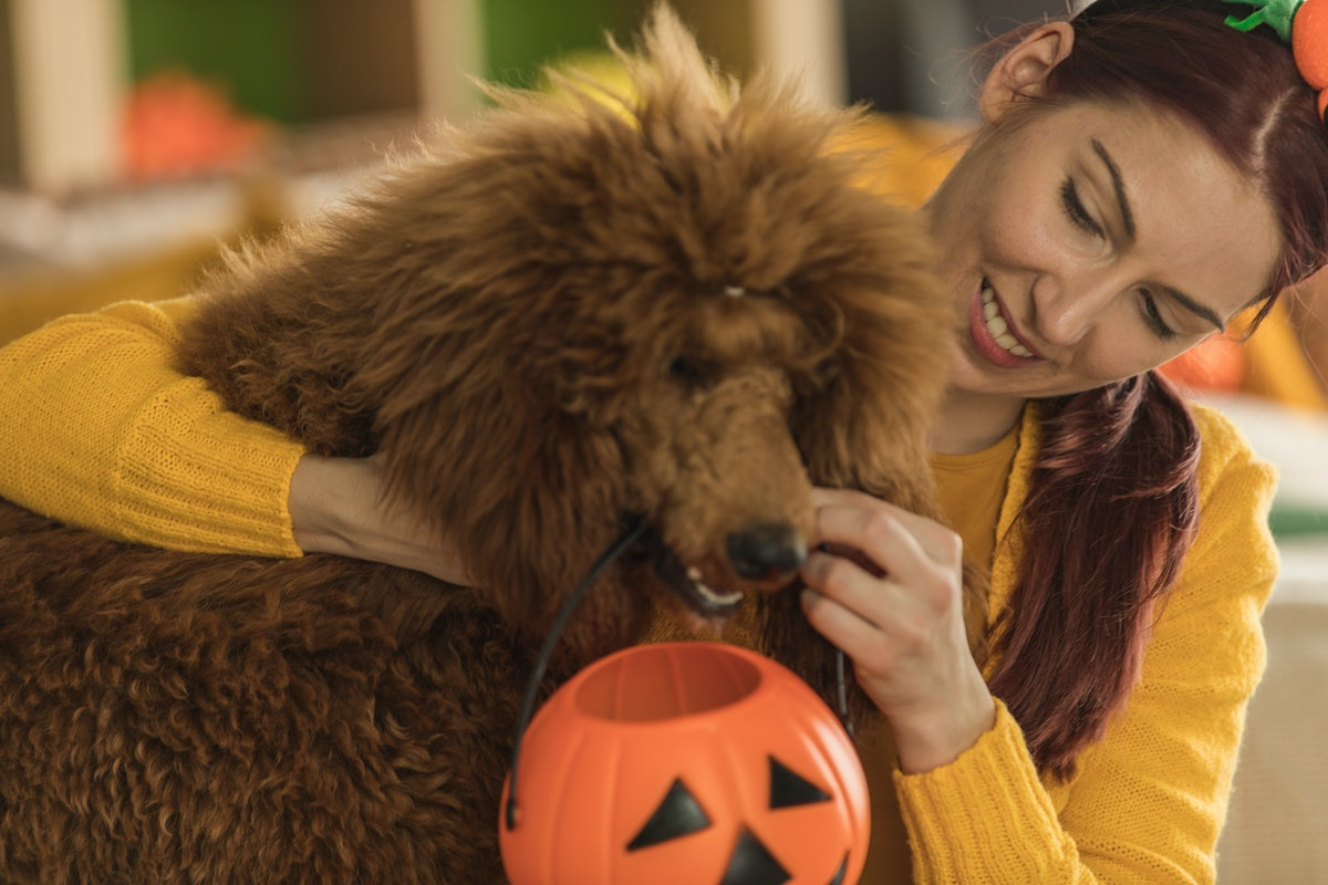 A woman hands her dog a jack-o-lantern basket for Halloween.